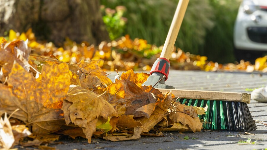 Leaf removal by Clean Slate Landscape & Property Management, LLC.