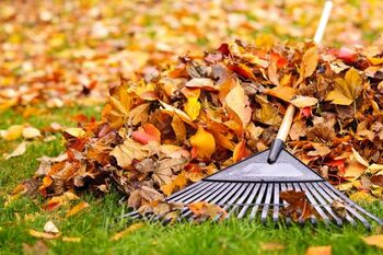 Fall Clean Up Services in Framingham Massachusetts