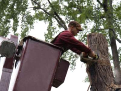 Tree services in Framingham by Clean Slate Landscape & Property Management, LLC